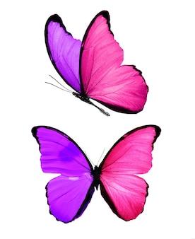 색깔의 날개를 가진 두 개의 나비입니다. 보라색 나방. 분홍색 곤충. 고품질 사진