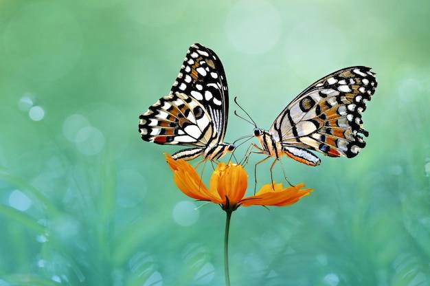 꽃에 두 나비