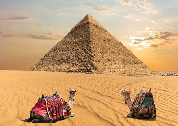 エジプト、カフラー王のピラミッドの近くにいる2頭のラクダ。