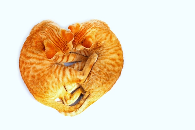 Two cat sleeping in the shape of a heart.