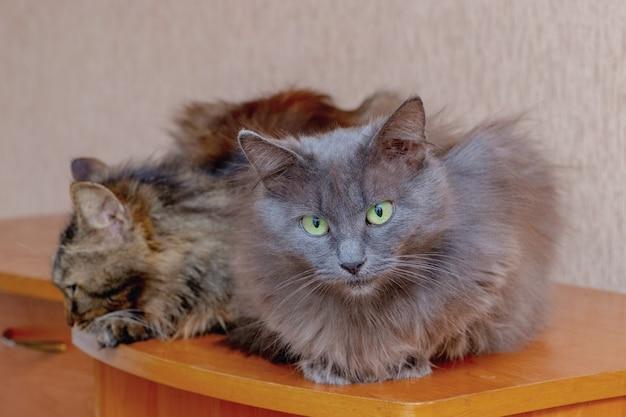 2匹の猫が隣同士に座っています