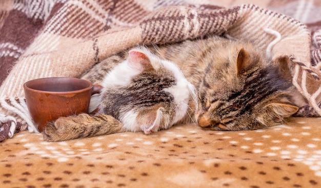 一杯のコーヒーの横で2匹の猫が寝ています。ベッドでコーヒー
