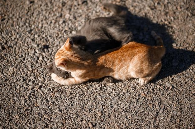 태양 아래서 서로 노는 검은색과 빨간색 고양이 두 마리