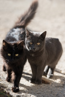 Two cats black and gray looking at camera