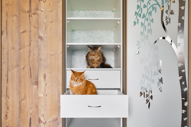 Two cats exploring shelves in a wardrobe