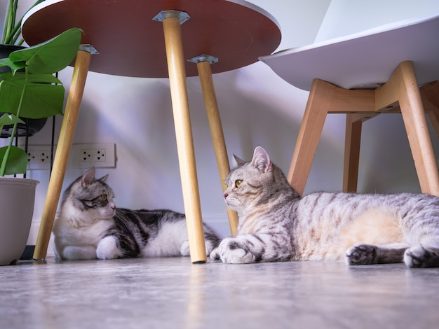 Two cats on floor and air purifier tree monstera,sansevieria  in living room