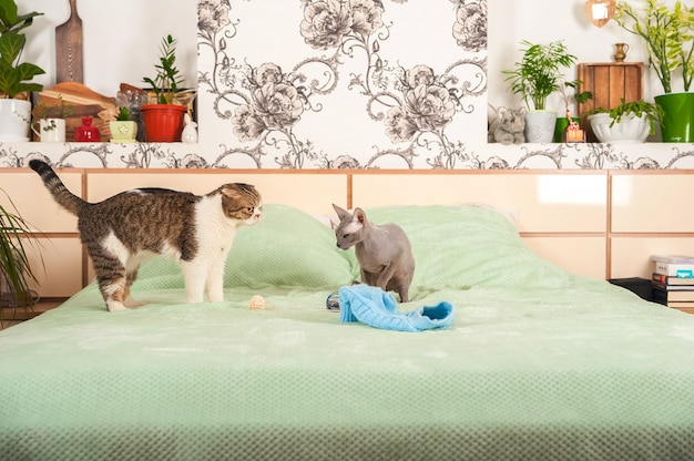 Two cats in a house quarrel and make peace.