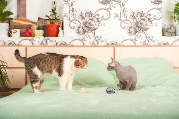 Two cats in a house quarrel and make peace
