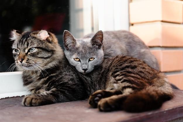 Две кошки опираются друг на друга как друзья кошки дружба
