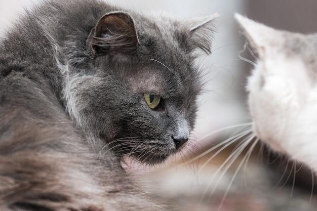 2 匹の猫がお互いを見て、猫がクローズ アップ