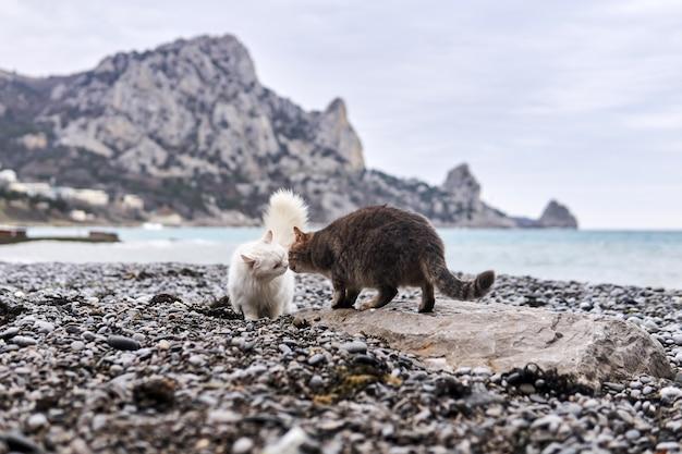 Две кошки знакомятся и знакомятся на галечном морском пляже.