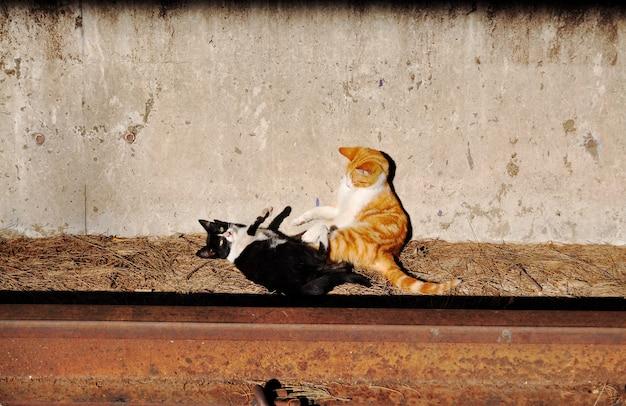 Две коты играют и стоят на железной дороге.