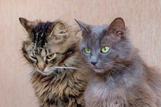 隣同士に座っている2匹の猫、猫の肖像画