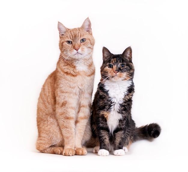 Две кошки сидят бок о бок белая стена
