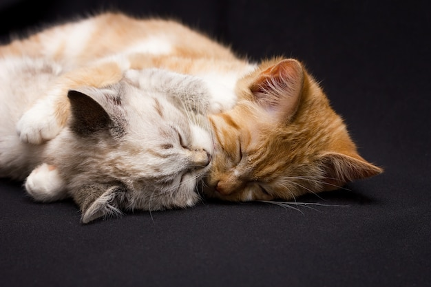Two cats sleep in an embrace, on a black background