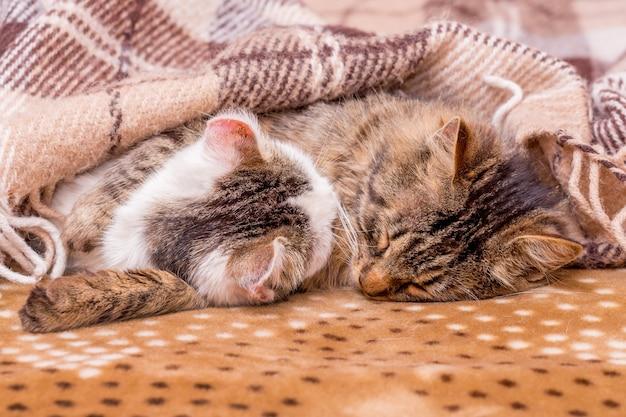 2匹の猫が毛布で覆われたベッドで寝ています。いい夢を