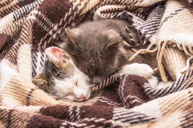 毛布で覆われた2匹の猫が一緒に寝る