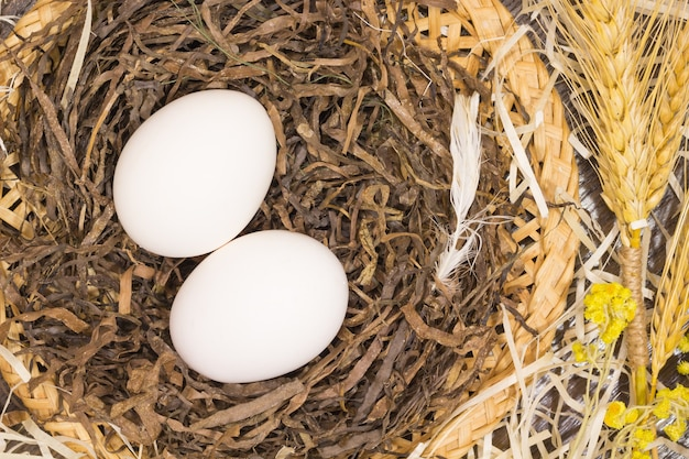 Two chicken eggs in a nest. chicken feather. branch wheat