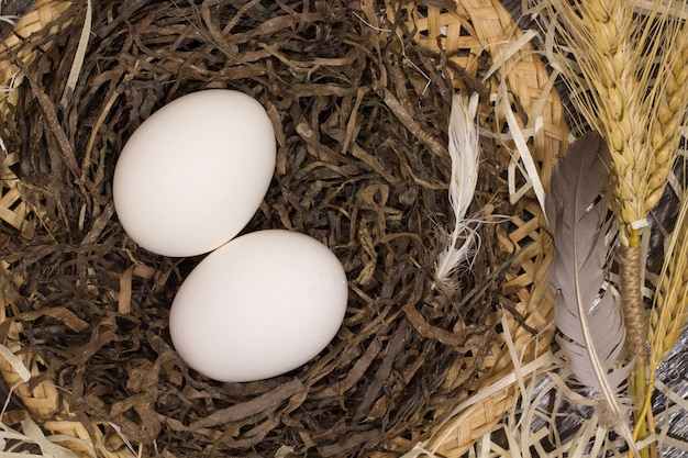 Two chicken eggs and two feathers in the nest