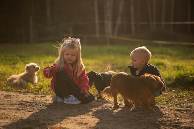 2人の子供の女の子と赤ちゃんのボーイシスターと兄弟が屋外でペットの犬と遊んでいます
