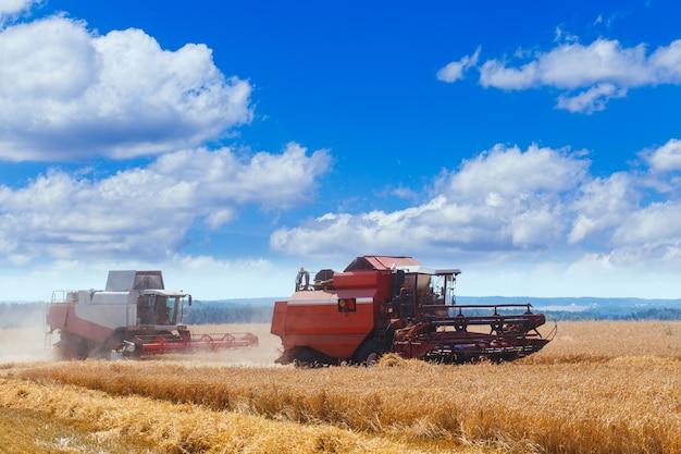 Два зерноуборочных комбайна вместе работают на пшеничном поле