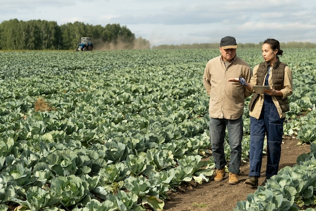 Two contemporary farmers discussing new methods of growing cabbage