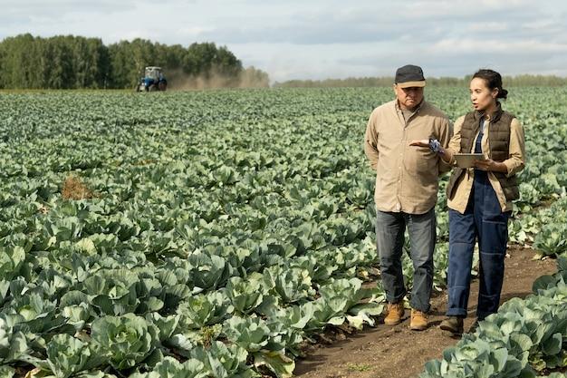 양배추 재배의 새로운 방법에 대해 논의하는 두 명의 현대 농부