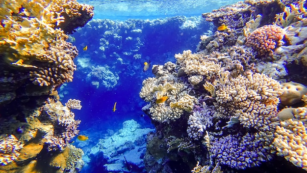 Two coral reefs between which tropical fish swim