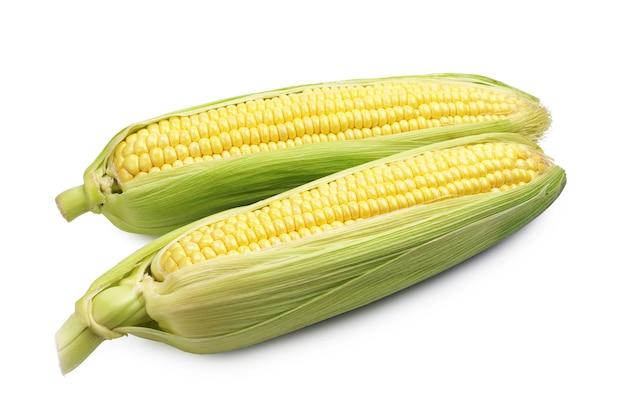 Two corn cob on white background