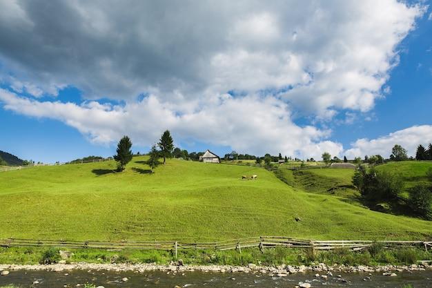 丘の上の家の近くの緑の牧草地で放牧している2頭の牛。