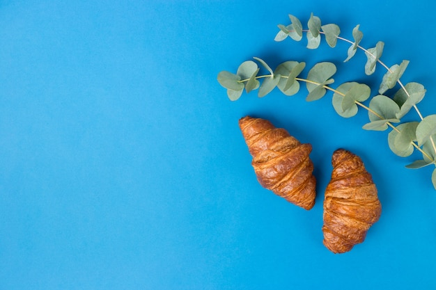 Two croissants and eucalyptus leaves on blue background. good morning or food concept. flat lay banner, top view, copy space.