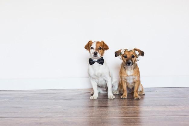 白い背景にボウタイとバラの花輪を着て2つのかわいい美しい小型犬。結婚式のコンセプト