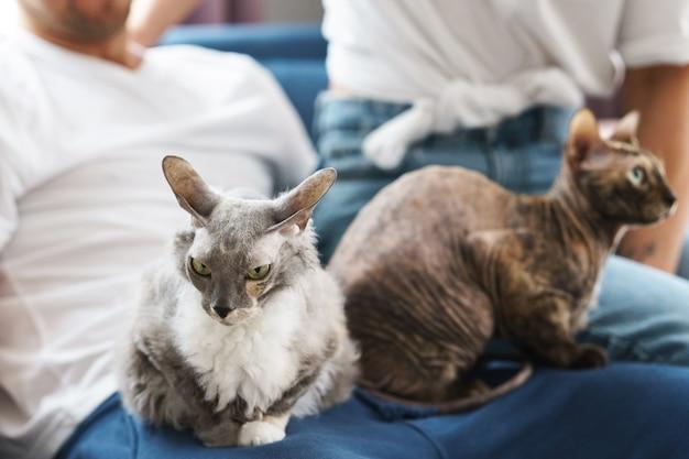 집에서 그들의 소유자 손에 앉아 두 귀여운 고양이