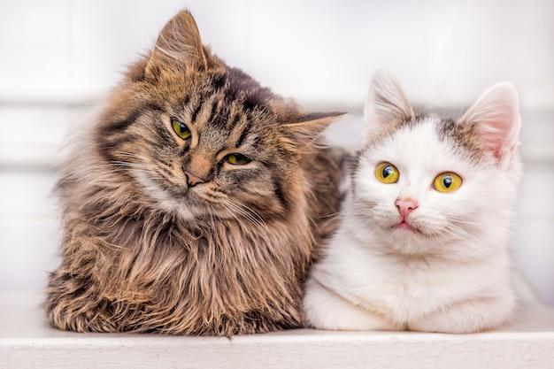 一緒に座っている2つのかわいい猫