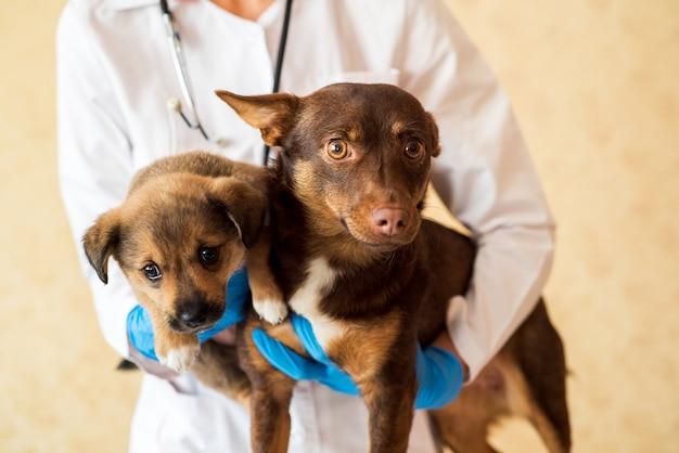 獣医クリニックで2匹のかわいい犬。