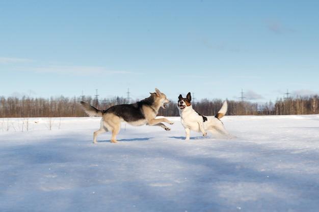 Две милые собаки дерутся и играют на зимнем поле в снегу