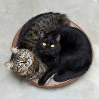 Two cute fluffy kittens lying in a basket looking up surprised