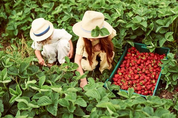 2人のかわいい子供の男の子と女の子がフィールドでイチゴを収穫し、楽しんで