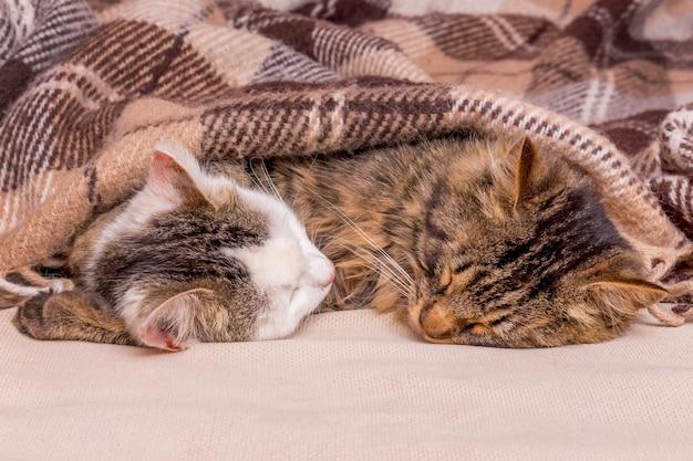 2匹のかわいい子猫がベッドで一緒に寝ます_