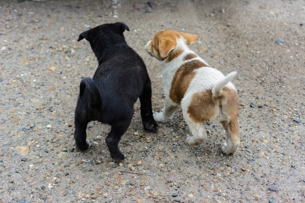 Two cute little homeless puppies fight, play and biting each other. one black another white-brown, spotty. funny friendly puppy games.