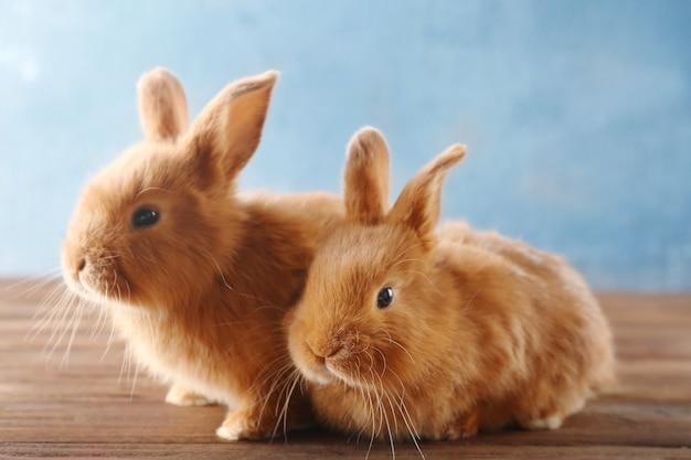 木の床に2匹のかわいいウサギ