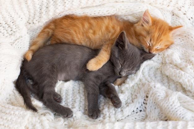 Two cute tabby kittens sleeping and hugging on white knitted scarf.