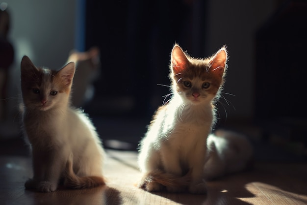 美しい光の中で2匹のかわいい若い赤ちゃん赤い子猫