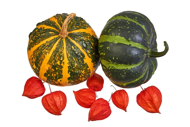Two decorative pumpkins and physalis on a white background. autumn still life