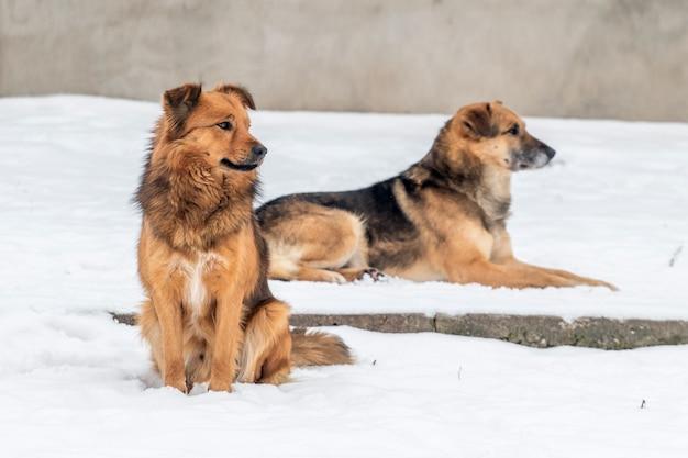 冬の雪の中で2匹の犬、1匹は座って、もう1匹は雪の中で横たわっています。冬の動物