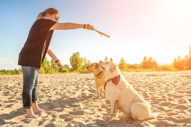 자연 속에서 야외에서 두 마리의 개 래브라도 머리는 태양 플레어를 앉으라는 명령을 수행합니다