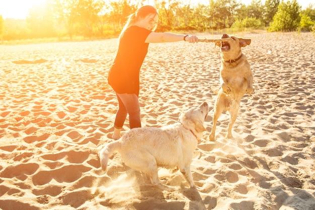 야외에서 두 마리의 개 래브라도 머리가 태양 플레어 명령을 수행합니다.