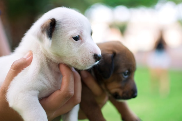 Two dog puppies one white and one brown
