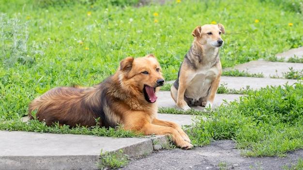 Две собаки отдыхают в саду на аллее