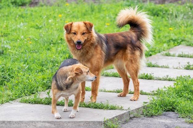 Две собаки отдыхают в саду